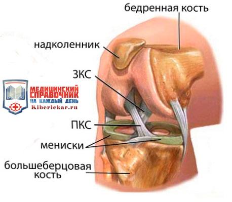 Как выглядит мениск коленного сустава остеоартроз локтевого сустава